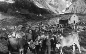 Pastori con le mucche all'alpe Kastel