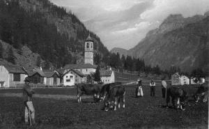 Mucche che pascolano nei prati della frazione Chiesa