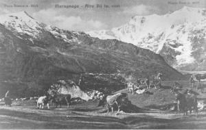 Alpe Bill